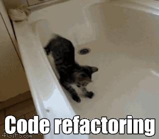 An adventurous cat