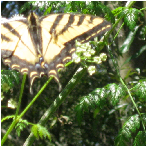 Pan and scale applied to the butterfly image