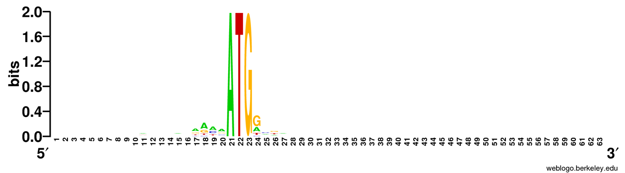 Sequence logo of chromosome 1 of Oryza sativa japonica, derived from 2,134 sequences, restricted to those initiating with an ATG codon. This logo shows a canonical Kozak motif surrounding the initiating ATG. The x-axis represents the nucleotide position 20 bases upstream and 20 bases downstream of the ATG initiation codon. Some information in the wobble bases (third position) shows in the coding portion of the sequence. The other chromosomes were similar.