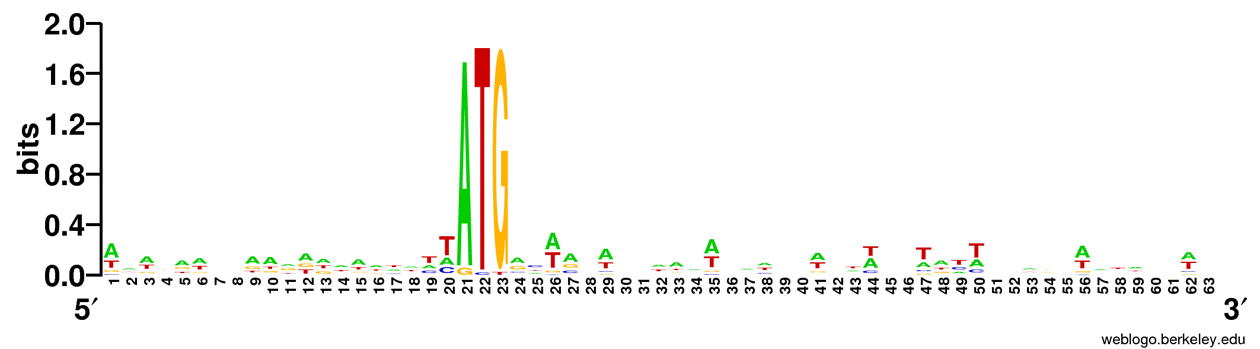 Sequence logo of chloroplast translation initiation motifs. The x-axis represents the nucleotide position 20 bases upstream and 20 bases downstream of the ATG initiation codon. Bias in the wobble base of the codons is much more pronounced in this logo since only 81 sequences were available to analyze in Arabidopsis chloroplasts.