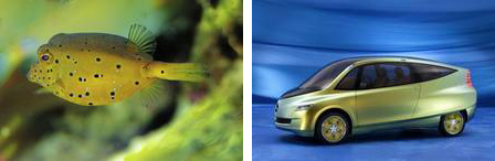 Boxfish (left), box concept car (right). Photo source: http://www.greencarcongress.com.