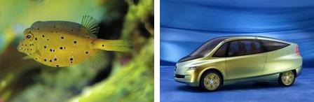 Boxfish (left), box concept car (right). Photo source: http://www.greencarcongress.com.